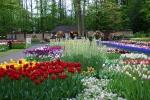 3_tulip.jpg