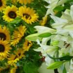 mix di fiori